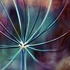 Garden Medusa V