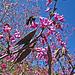 Descanso Gardens Bee (2280)