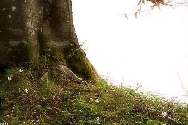 zartes am Baum ...