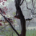 Laffy4k: Rain (pluvo)