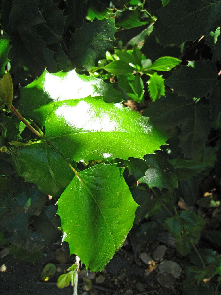 Descanso Gardens Greenery (2356)