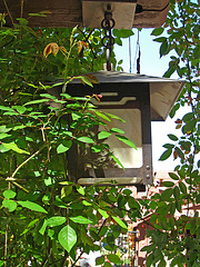 Descanso Gardens Lamp (2324)