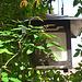 Descanso Gardens Lamp (2325)