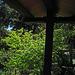 Descanso Gardens Shrubbery (2317)