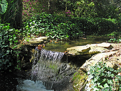 Descanso Gardens Waterfall (2244)