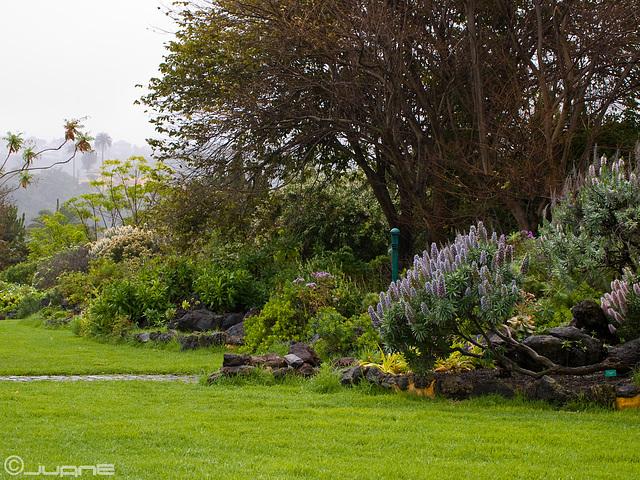 """Jardín Botánico """"Viera y Clavijo"""""""