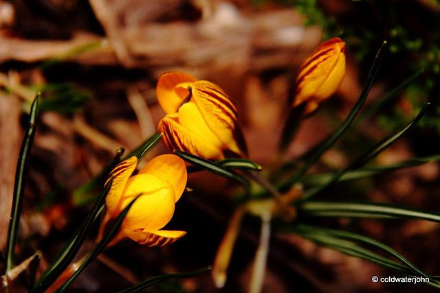 Courtyard Garden flowers in February