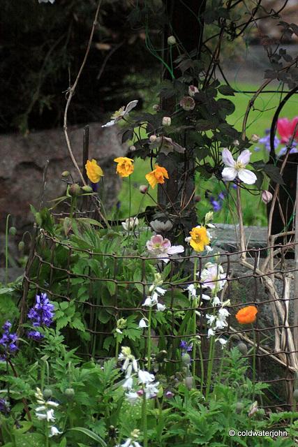 Courtyard Garden: May Evening
