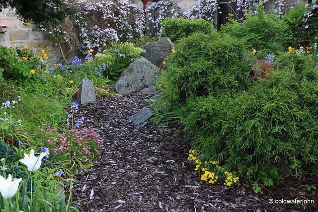 Courtyard Garden series - May 25th