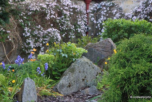 Courtyard Garden series - May 25th