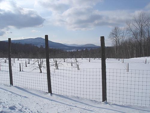 L'hiver dans les Cantons de l'est au Québec.   Février 2009
