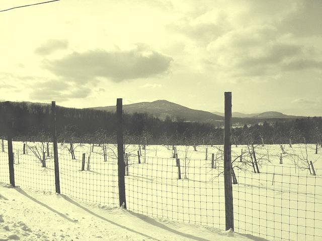 L'hiver dans les Cantons de l'est au Québec.   Février 2009-  Vintage