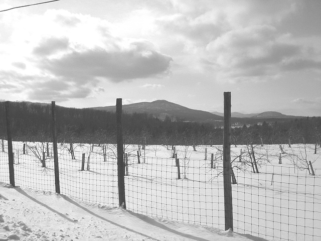 L'hiver dans les Cantons de l'est au Québec.   Février 2009 -  B & W