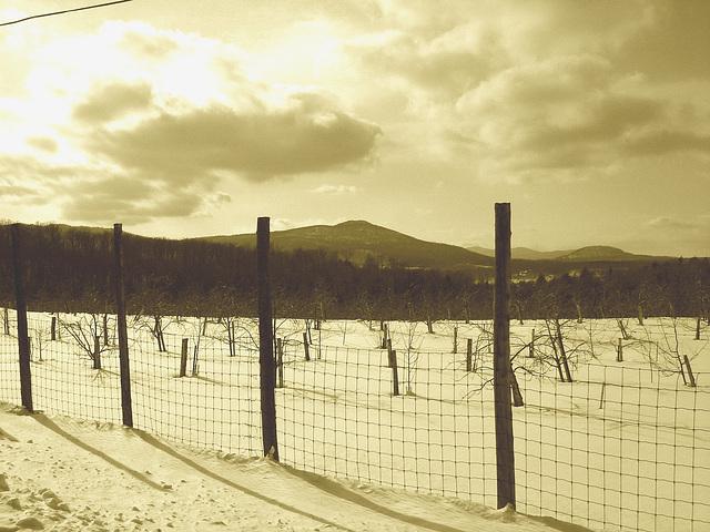 L'hiver dans les Cantons de l'est au Québec.   Février 2009 - Sepia
