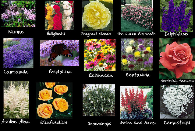 Crib sheet for the new flowerbed contents