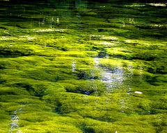 Cool Green Heaven