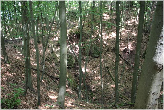 Buchen im Kalkbruchwald