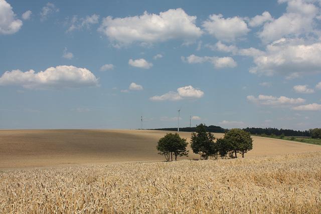 zwischen Kornfeldern