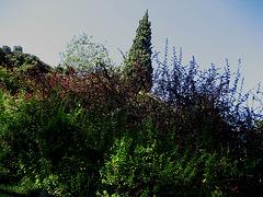 Lisboa, Garden of Foundation Calouste Gulbenkian, a vegetal obelisk (4)