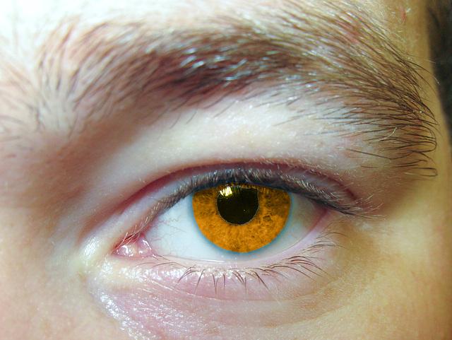 EyeMakroCutkindofbrown
