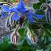 Descanso Garden (2262)