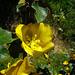 Descanso Garden (2281)