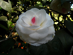 Descanso Garden (2306)