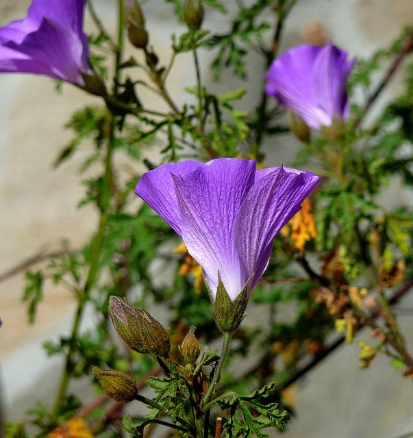 Descanso Garden (3890)