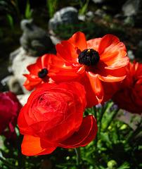 Descanso Gardens (2191)