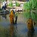 Descanso Gardens (3896)