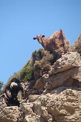 Crète 2008 071