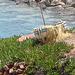 Crète 2008 029