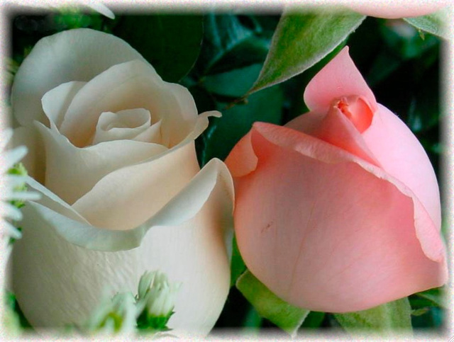 Les Roses de Saadi, œuvre de Marceline Desbordes-Valmore