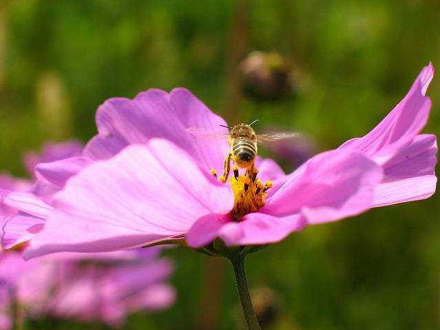 """""""Les hypocrites, comme les abeilles, ont le miel à la bouche et l'aiguillon caché"""", citation de Jacques Delille"""