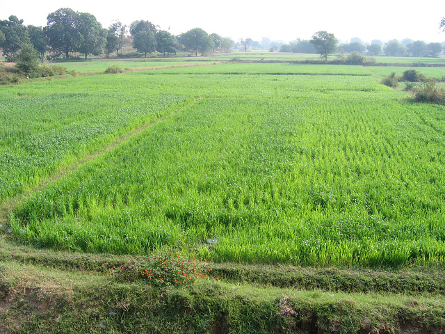 18:1* Dungarpur to Amla Fort BIS - 09
