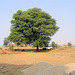 18:1* Dungarpur to Amla Fort BIS - 10