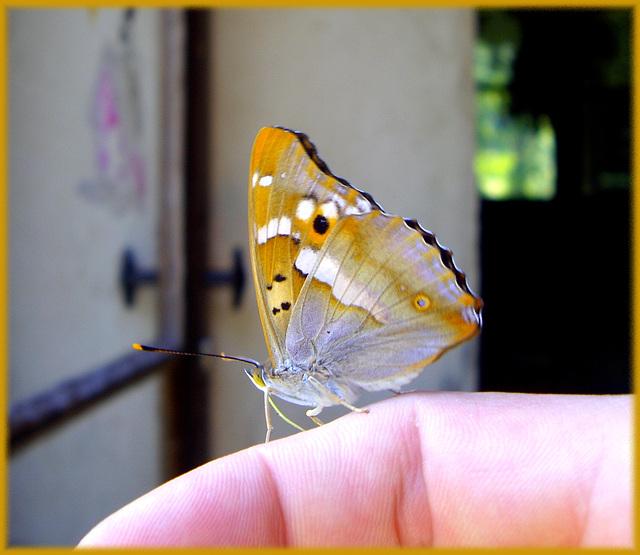 Papillon magique