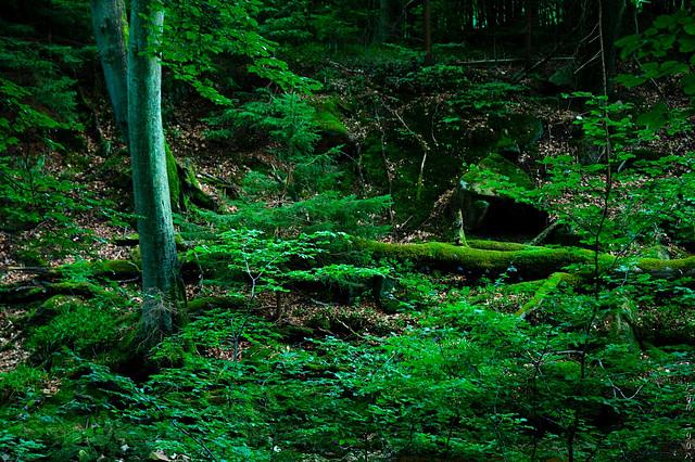 Moss, Moss and... Moss