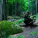 Tree, Stumb, Stone