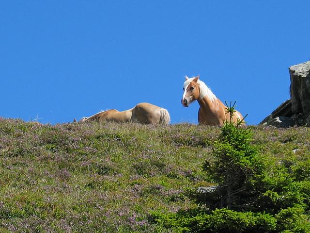 neugieiges Pferd - wer kommt den da zu uns hoch