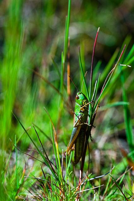 Grasshopper // up