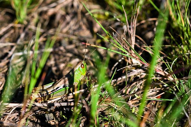 Grasshopper // side