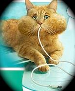 Jouer au chat et à la souris ?