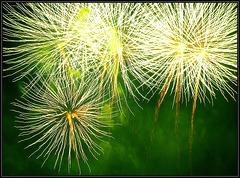 Feuerwerk  023