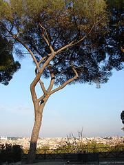 Rome 066