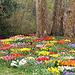 Bäume umringt von Frühlingsblumen