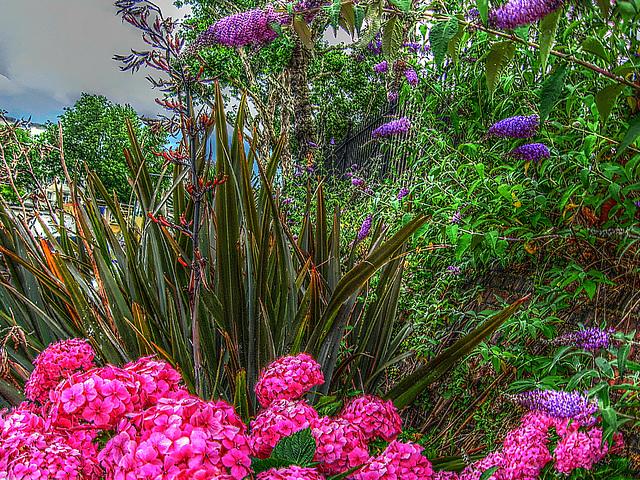 Canalside flora