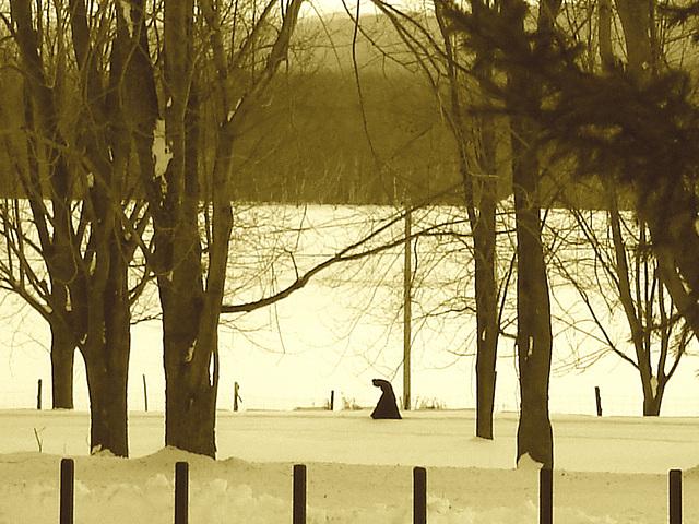 Ti-moine bossu /  Hunchback monk - Abbaye de St-Benoit-du-lac abbey - Février 2009- Sepia