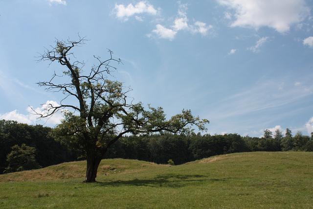 Baum zwischen Hügeln  / Tree between mounds