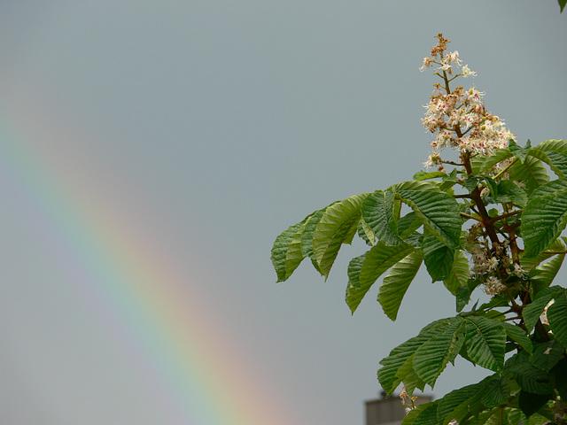 Frühlingsregenbogen